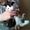отдам в добрые руки здоровых,  очень умных котят, красивого окраса #903925