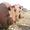 Вертикальные гуммированные аппараты с эллиптическими днищем и крышкой б/у #1706241