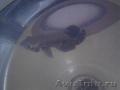 хищная аквариумная рыба