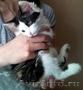 отдам в добрые руки здоровых,  очень умных котят, красивого окраса