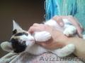 отдам в добрые руки здоровых, очень умных котят,красивого окраса - Изображение #3, Объявление #903925