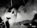 Милый домашний кролик - Изображение #2, Объявление #1168132