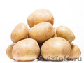 Элитный семенной картофель отличного качества, Объявление #1540783